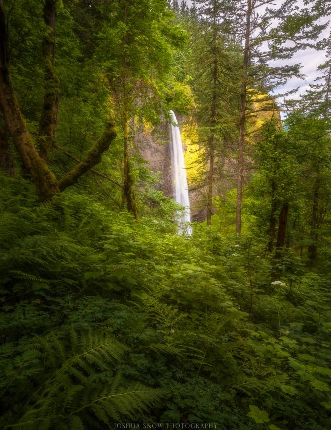 Latourelle Falls Forest Comp - Copy